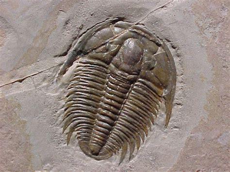 Batuan Dan Fosil By apa itu fosil batutenggara