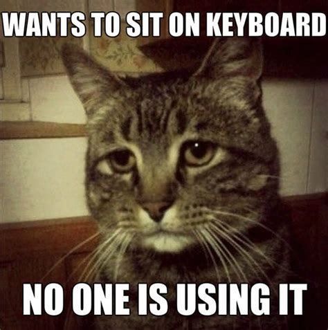 Cat Problems Meme - first world cat problems myfunnypalace