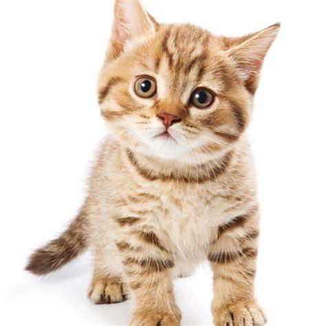 Cha T les diarrh 233 es aigu 235 s chez le chat pathologies de l