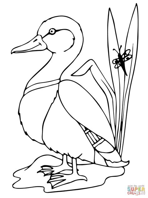 mallard duck coloring page free printable coloring pages