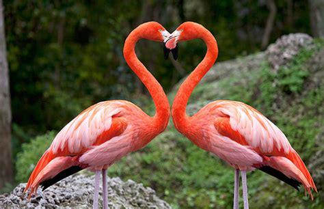 imagenes animal flamenco animales curiosos 191 por qu 233 los flamencos son de color rosa