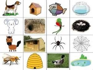 animal homes match the animals to their homes animal habitats