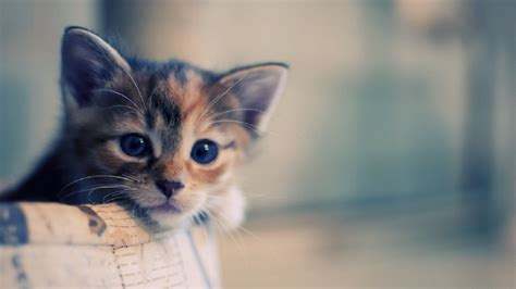 funny pictures funny cats wallpapers hd wallpapers fan