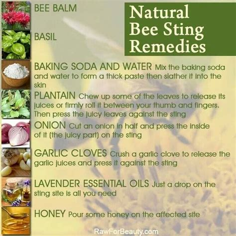 bee sting remedy bee buzz