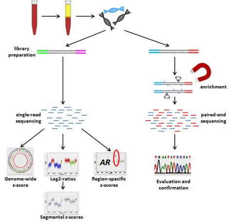 illumina gene sequencing outline of our whole genome plasma analysis strategy