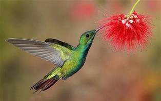 colors of hummingbirds colorful hummingbirds 39 photos funmag org