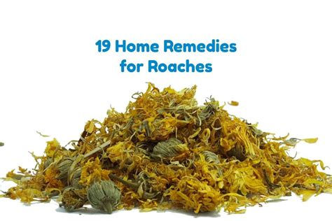 how to get rid of roaches for fast naturally
