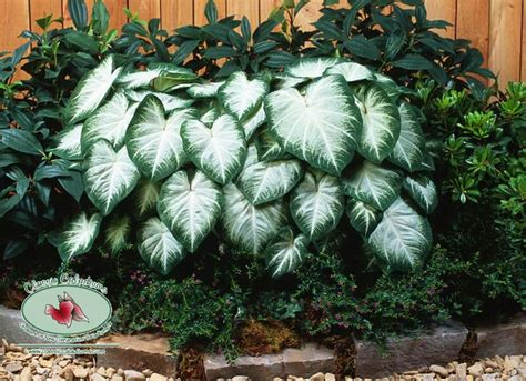 Ls For Indoor Plants by 10 Best Images About Bed Birm Left On 4x4