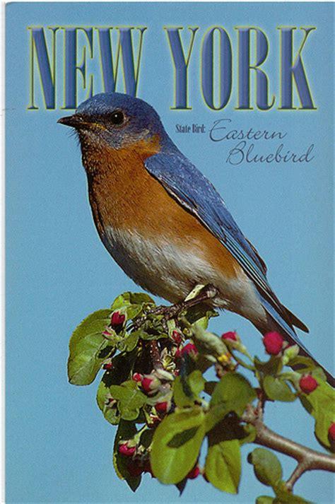 new york state bird flickr photo sharing