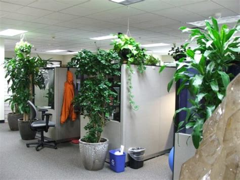 plants for office indoor on pinterest office plants plants and zen style