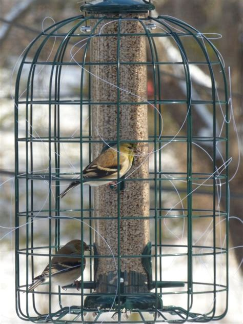how to discourage house sparrows from feeders