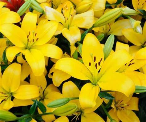 frasi fiori fiori immagini e foto da condividere sapevatelo