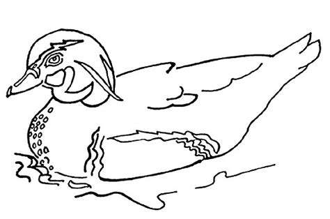 simple duck coloring page duck pictures to print kids coloring europe travel