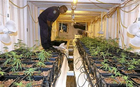 shipping container grow room judge to defendent get on with it tweed daily news