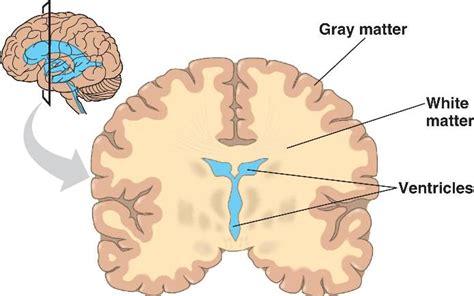 grey matter index of locked media ch49