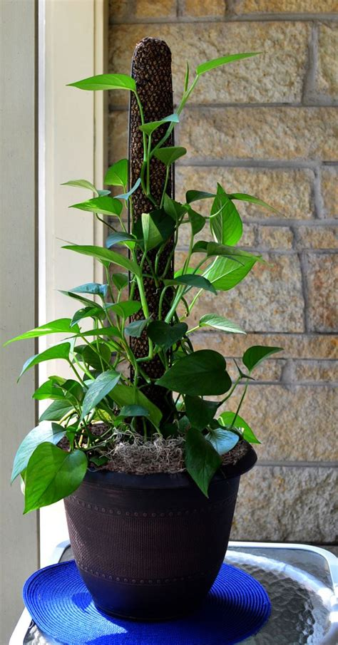 One Bedroom Apartments Fort Collins 28 Coconut Plant Stakes Climbing Plant Plant Stakes
