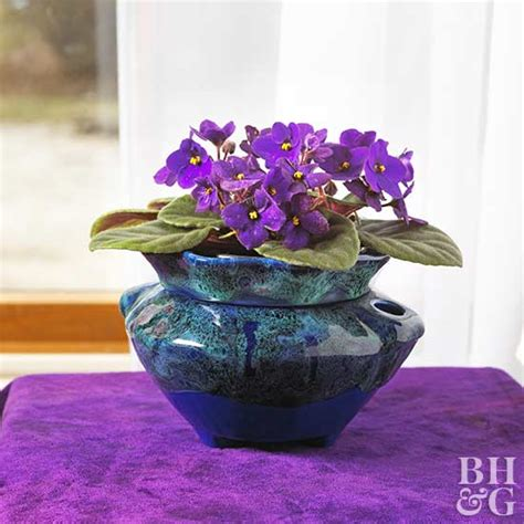 good houseplants for dark rooms best free home 24 beautiful blooming houseplants