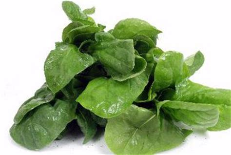 the bioavailability of calcium from spinach healthy