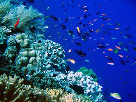 unesco wakatobi adalah cagar biosfer dunia mongabay co id