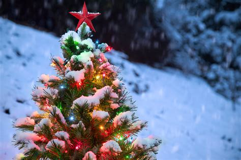 where to put christmas tree small medium and large christmas trees are waiting to be