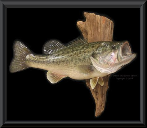 Fisch Bass by Fish Hits Photos Bass Fish Photos