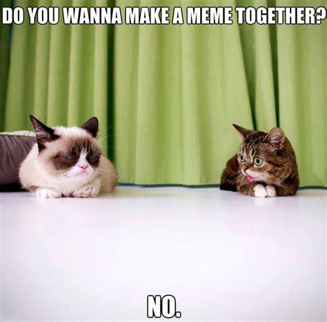 Lil Bub Meme - funny image lil bub and grumpy cat jpg