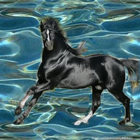 harley ann wolf christmas for two black stallion horse horses images black stallion run