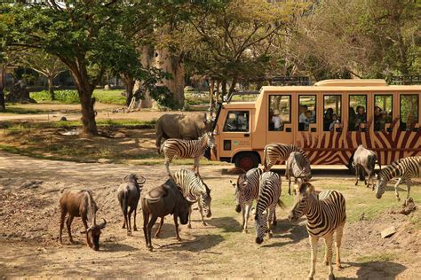Safitri Syari bali safari park book direct and save 10