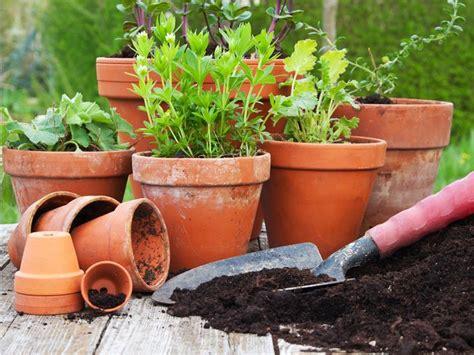 vasi e fiori vasi da fiori vasi da giardino come scegliere i vasi