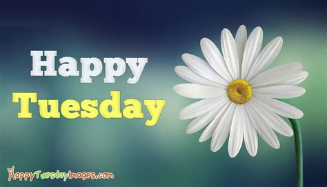 tuesday images morning tuesday