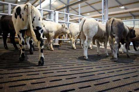 ireland rubber cow matting easyfix slat rubber beef easyfix