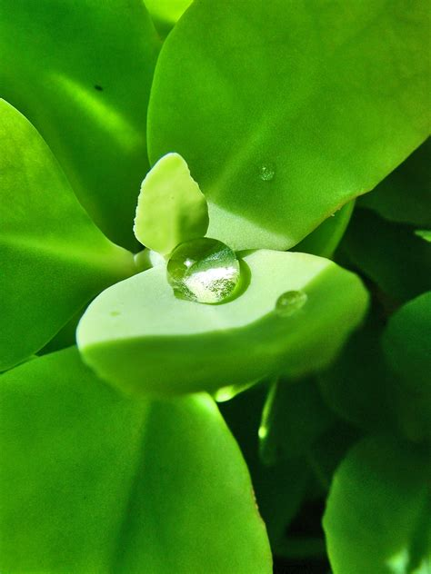 how much water does a need how much water do your potted plants need flower pressflower press