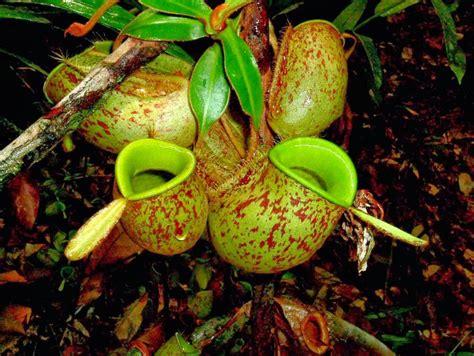 wallpaper akar daun 10 fauna dan flora terlangka di indonesia flora dan fauna