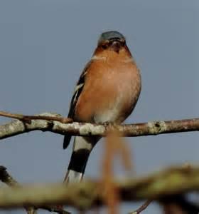 oiseaux jardin belgique images