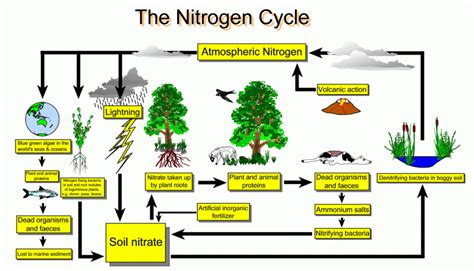 pengertian slide layout animation worksheet nitrogen cycle licensed for non commercial use only