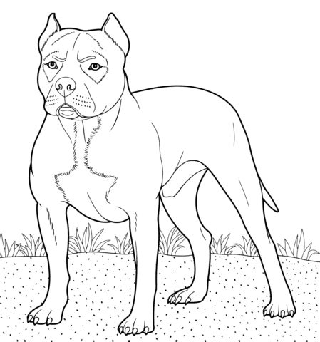 imagenes para dibujar de perros pitbull dibujo de american pit bull terrier para colorear