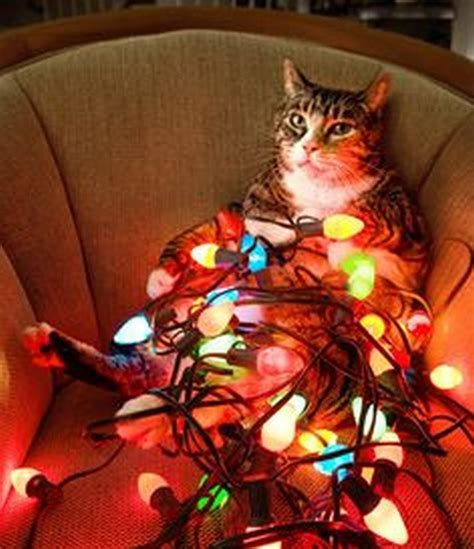 funny christmas decoration lights 17 pics
