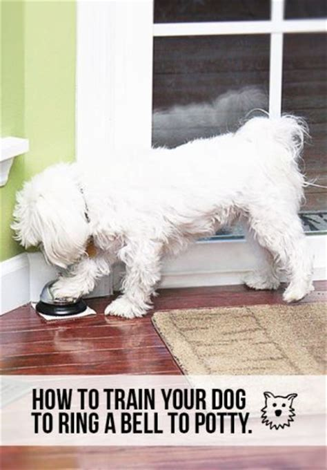 how to train your dog to go to the bathroom learn how to train your dog to ring a bell to go potty a great resource for new dog