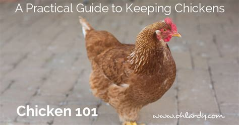pheasant keeping for a practical handbook on the rearing and general management of aviary pheasants classic reprint books a practical guide to keeping chickens chicken basics