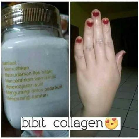Bibit Collagen Dari Cv Sh bibit collagen original pemutih kulit cv mecca anugrah