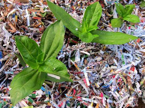 How To Make Paper Mulch - shredded paper as garden mulch clover farm