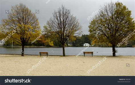 Trees That Shed Their Leaves In Winter by 3 Trees Shedding Their Leaves In Autumn As Winter Approaches Stock Photo 596230