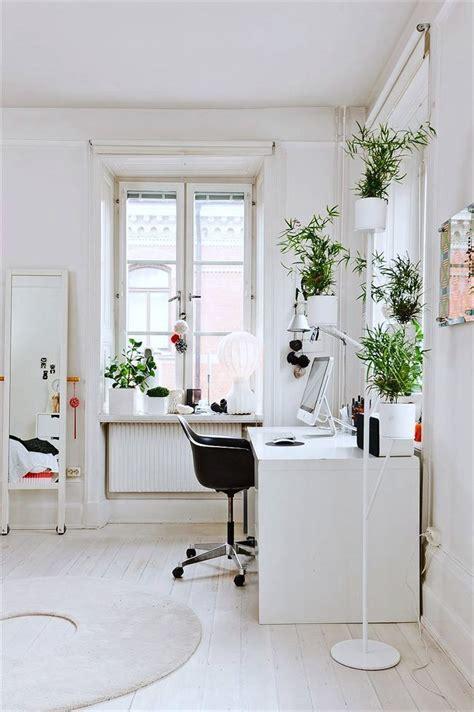 top  unkillable indoor plants  ultimate desk
