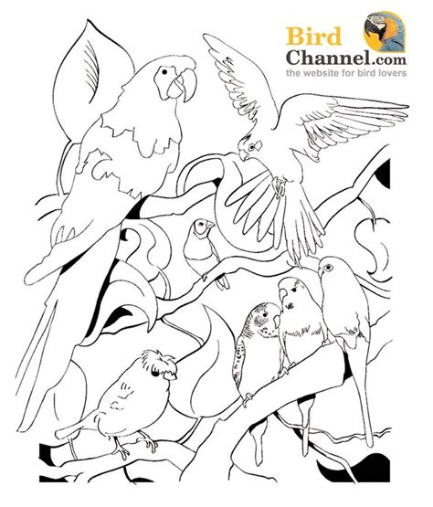 coloring pages with multiple animals 106 best parrot coloring pages images on pinterest