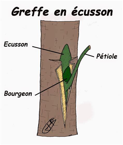 Faire Pousser Un Cerisier à Partir D Un Noyau by Les Secrets De La Taille Et De La Greffe Des Arbres