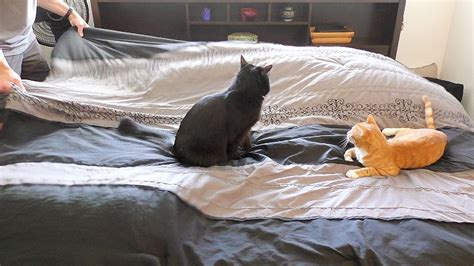 how to keep cat off bed making a bed with cats around youtube