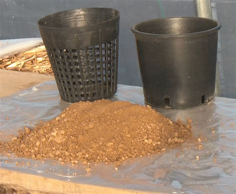 vasi per ninfee preparazione terreno e vasi per ninfee piante acquatiche