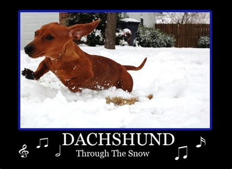 bantal dachshun thru the snow dachshund through the snow dobrador dachshunds