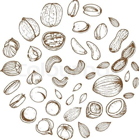 how to make doodle nuts nuts collection drawings sketches drawing vector