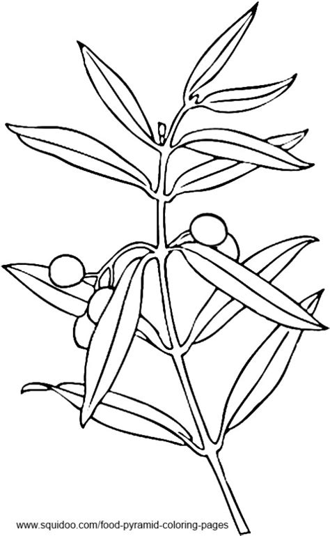 coloring page of olive tree food pyramid coloring pages hubpages